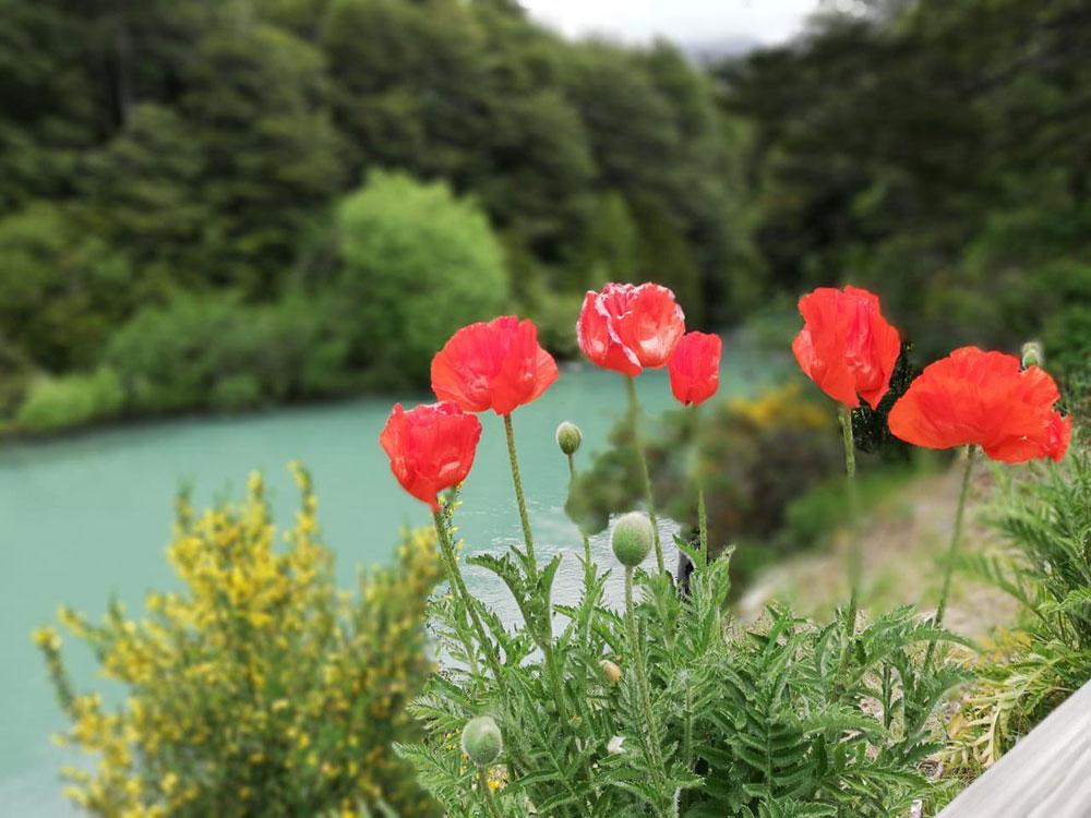 Flores rojas al lado del lago en un bosque.