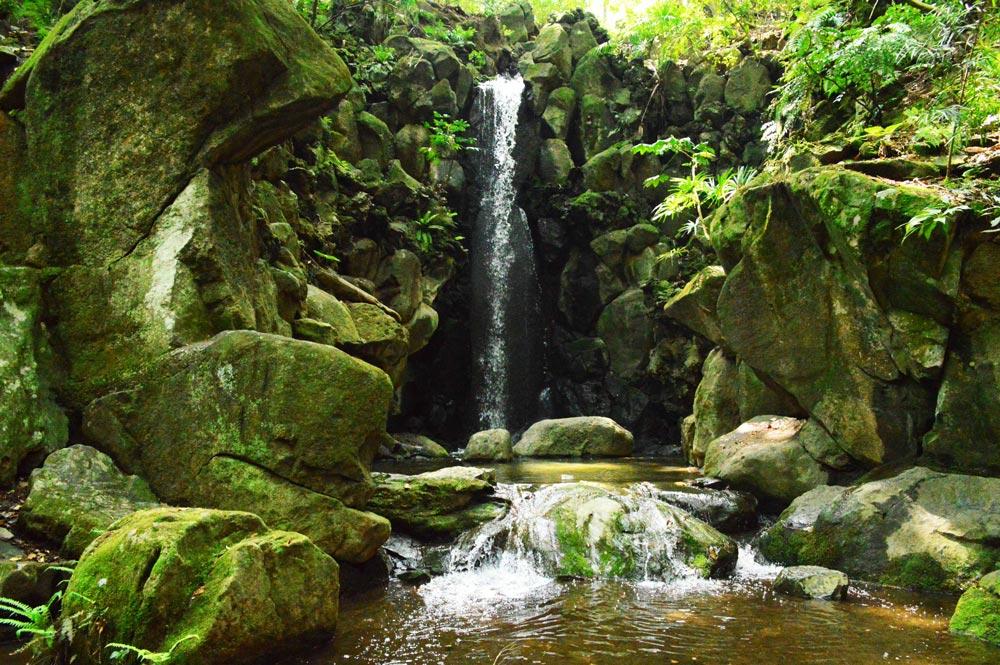 Cascada de agua en la selva verde.