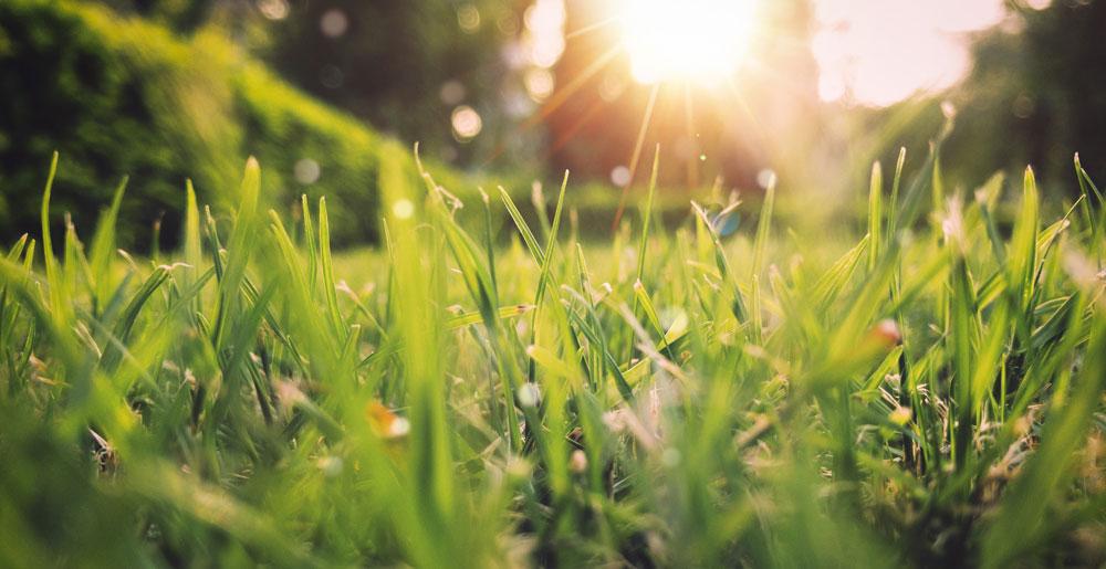 Sol del atardecer sobre el pasto.