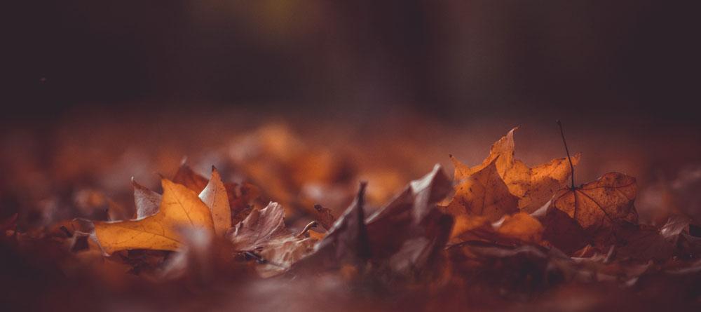 Hojas de otoño secas en el suelo.