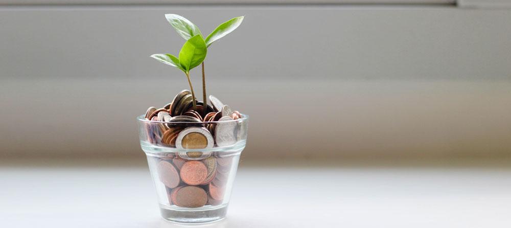 Maceta con monedas entre sus raíces.