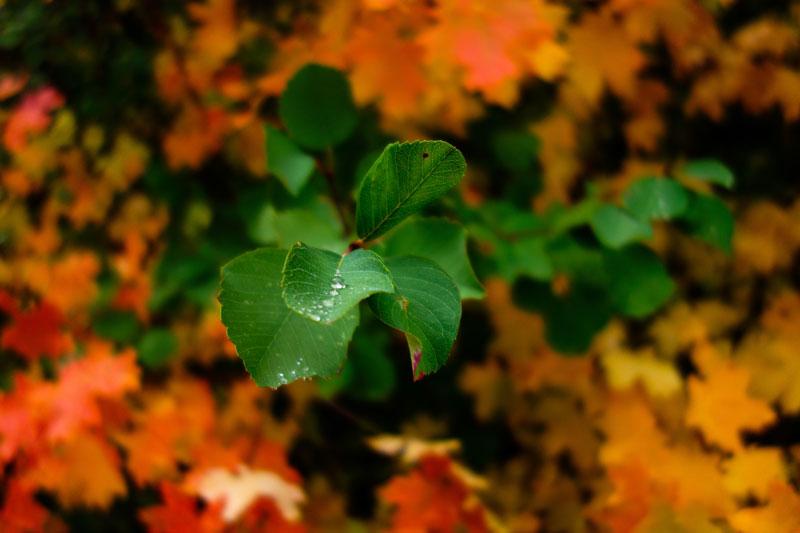Hojas verdes sobre un montón de hojas otoñales amarillas y naranjas.